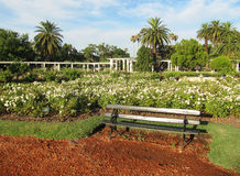 Summer garden of roses in Buenos Aires. Sincere rest. Stock Photography