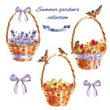Summer garden`s set with decorative wicker baskets with flowers, sparrows and berries stock illustration