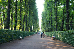 Summer Garden of Saint Petersburg Royalty Free Stock Photo