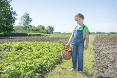 In summer, in the garden, a small, cute, curly girl holds a bask royalty free stock image