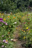 Path though a garden of summer wildflowers royalty free stock photography