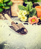 Summer gardening with scoop of soil , flowers pot and blooming Stock Photography