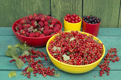 Summer gather of berries. Still life with summer gather of various berries in the colorful bowls on the banch in the garden royalty free stock photos