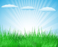 Summer glade Royalty Free Stock Images
