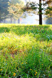 Summer glade flooded with light blurred, focus on grass Royalty Free Stock Photography