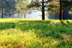 Summer glade flooded with sunlight Stock Image