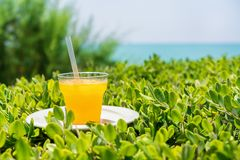 Summer, a glass of fresh juice from yellow tropical fruits on the beach, on green grass, against the background of the sea. Summer, a glass of fresh juice from royalty free stock images