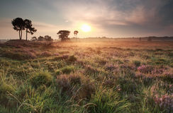 Summer gold sunrise over meadow Royalty Free Stock Photos
