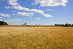 Golden barley fields in a patchwork summer landscape Stock Photography