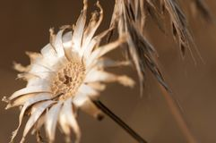 Summer golden flower Royalty Free Stock Photography