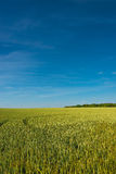 Summer golden sunset at farm field, gorgeous nature, Germany Stock Photos