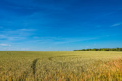 Summer golden sunset at farm field, gorgeous nature, Germany Royalty Free Stock Image