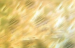 Summer Grain. Tuscany Italy Maremma Outdoor  Travel Stock Photography