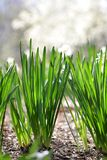 Summer Grass Royalty Free Stock Photography
