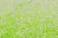 Summer Grass. Beautiful summer  green grass on highland meadow Stock Image