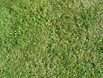 Summer Grass. Grass view from the top Stock Image
