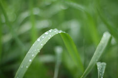 Summer grass. Moist grass on a summer morning Stock Photo