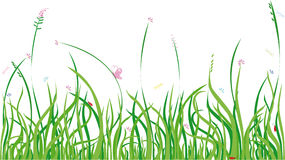 Summer grass. Background with grass and bugs,  design element Royalty Free Stock Photos