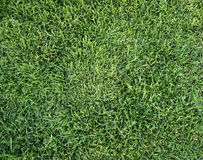 Green grass background texture lawn greenery plain plant soccer golf natural fresh park pattern surface abstract field wallpaper Stock Photos