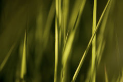 Summer grass, abstract background. Summer grass in evening sunshine, abstract nature background royalty free stock photography
