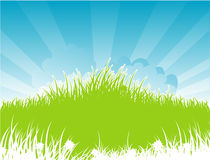 Summer grass back Royalty Free Stock Photography