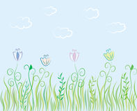 Summer grass background Stock Photography