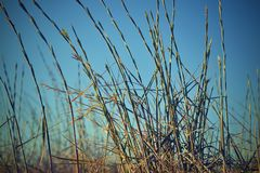 Summer grass on a background of the blue sky royalty free stock images