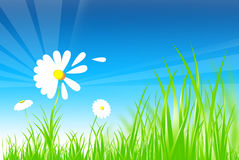 Summer Grass  Background Stock Image
