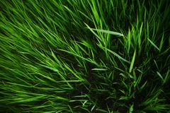Summer grass background. Spring or summer nature background with juicy grass stock photos