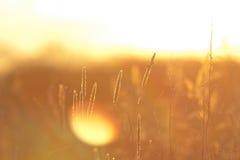 Summer grass background at sunset Stock Photos