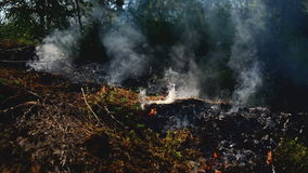 Summer grass is burning in wildfire, natural disaster. Royalty Free Stock Image