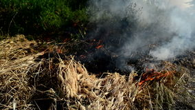 Summer grass is burning in wildfire, natural disaster. Royalty Free Stock Photos