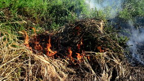 Summer grass is burning in wildfire, natural disaster. Royalty Free Stock Images