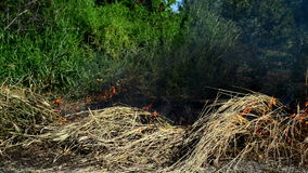 Summer grass is burning in wildfire, natural disaster. Royalty Free Stock Photo