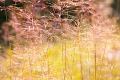 Summer grass close-up Stock Photography