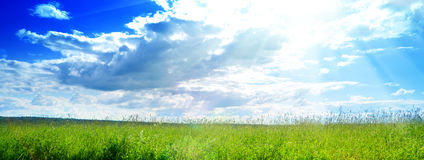 Summer grass and clouds. Field of fresh summer grass and clouds Royalty Free Stock Photography