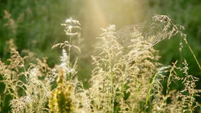 Summer Grass and Cobwebs stock video