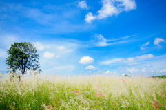 Summer grass field in blue sky. Royalty Free Stock Images