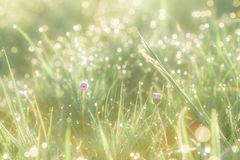 Summer grass field with flowers, abstract background concept, soft focus, bokeh, warm tones Stock Photos