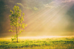 Summer grass field and tree in sunlight, golden nature background concept, sun rays, warm tones, lots of copy space.  royalty free stock photos