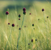 Summer grass Stock Photos