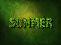 Summer in grass-font Stock Photography