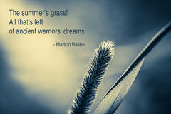 Summer Grass Haiku. The single blade of summer grass. Matsuo Basho - The summer's grass! All that's left of ancient warriors' dreams royalty free stock photo