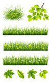 Summer grass and leaves collection. Summer grass and leaves vector collection on the white background Royalty Free Stock Photography
