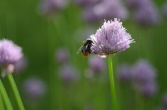 Honey-bearing flower Stock Images