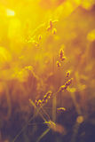 Summer Grass Meadow Close-Up With Bright Sunlight Royalty Free Stock Image
