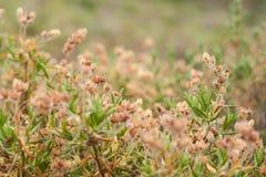 Summer Grass Meadow Close-Up Stock Photos