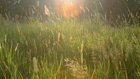 Summer Grass stock video footage