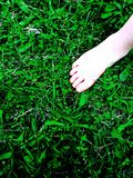 Summer grass Royalty Free Stock Images