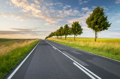 Summer grass by the road. In Germany royalty free stock images